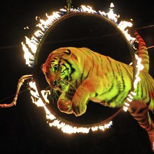Цирки Якшур-Бодьи